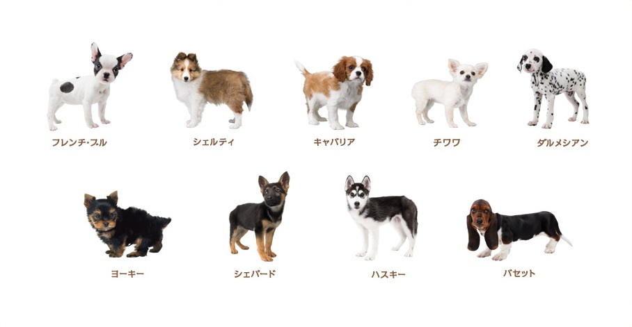 nintendogs cats 3 200x150 Nintendogs + Cats : les races de chiens
